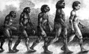 La teoria evolutiva di Darwin ha cambiato radicalmente il nostro modo di pensare